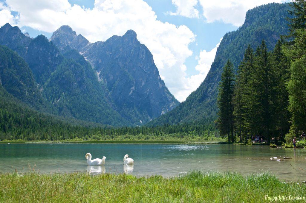 Cigni sul lago di Dobbiaco