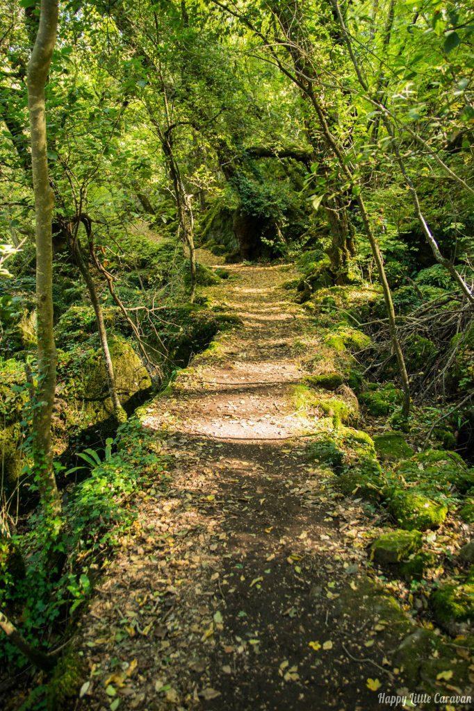 Sentiero - Bosco del Sasseto