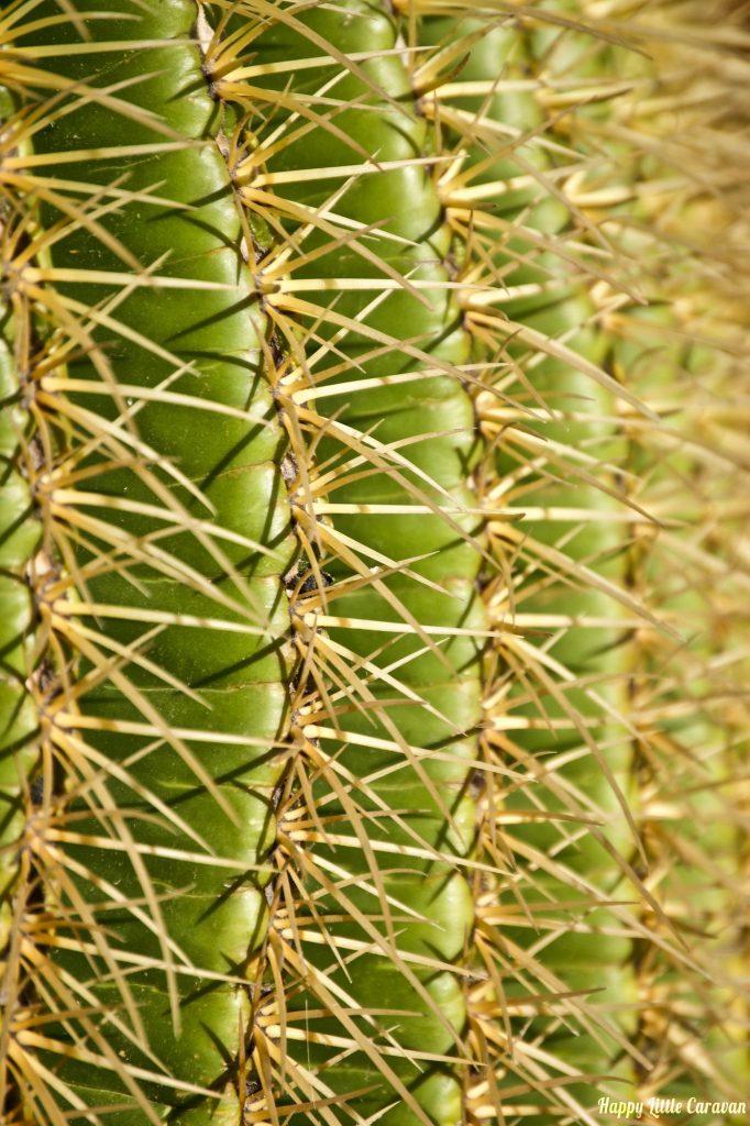 Lanzarote - Particolare di Cactus