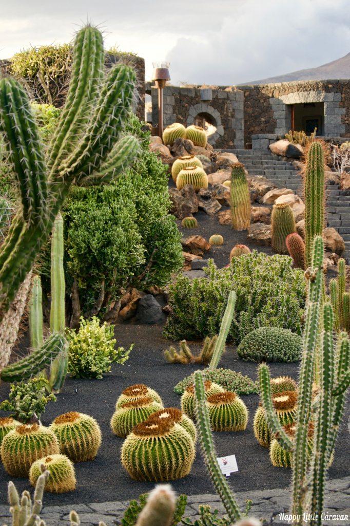 Canarie - Lanzarote - Jardin de cactus