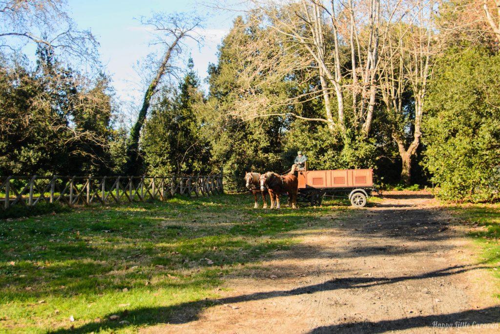 Cavalli - Oasi di Porto