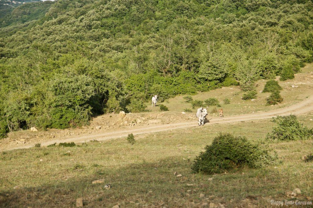 Vacche - TrekDays Decathlon