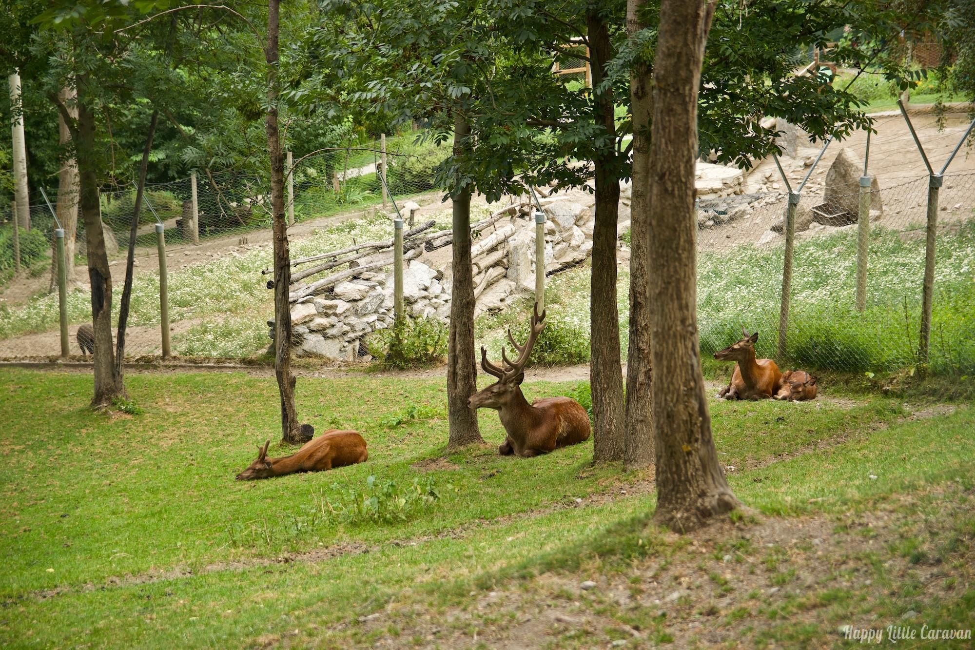 Parc Animalier d'Introd - zoo Valle d'Aosta - Cervi