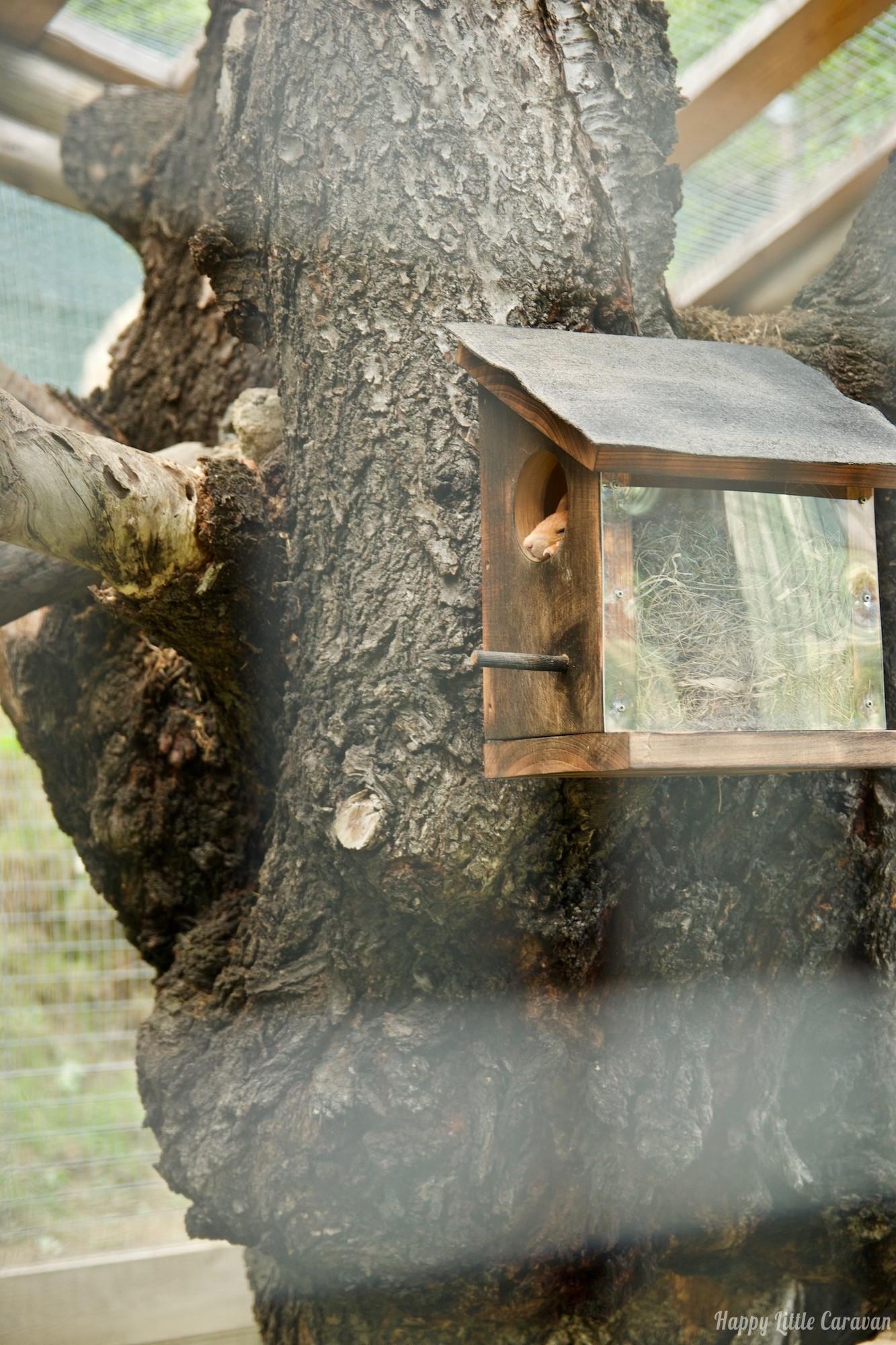Parc Animalier d'Introd - zoo Valle d'Aosta - scoiattolo